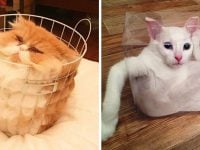 cats shapeshifters